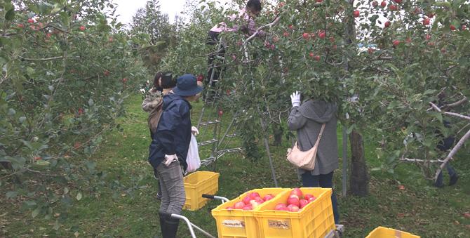 秋の行楽「りんご狩り」